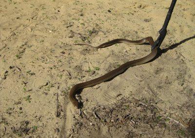 Snake Handling.